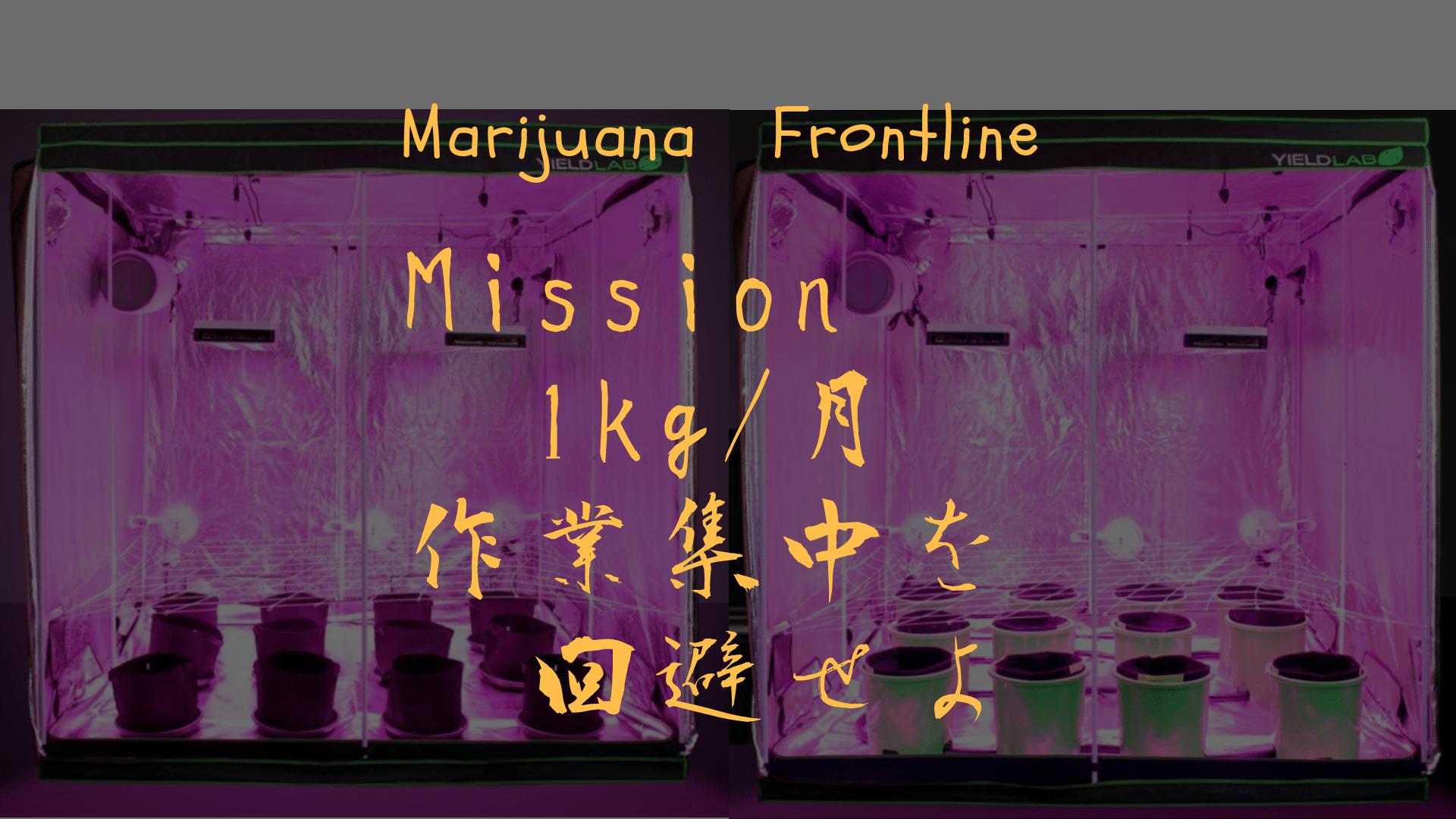 大麻栽培最前線