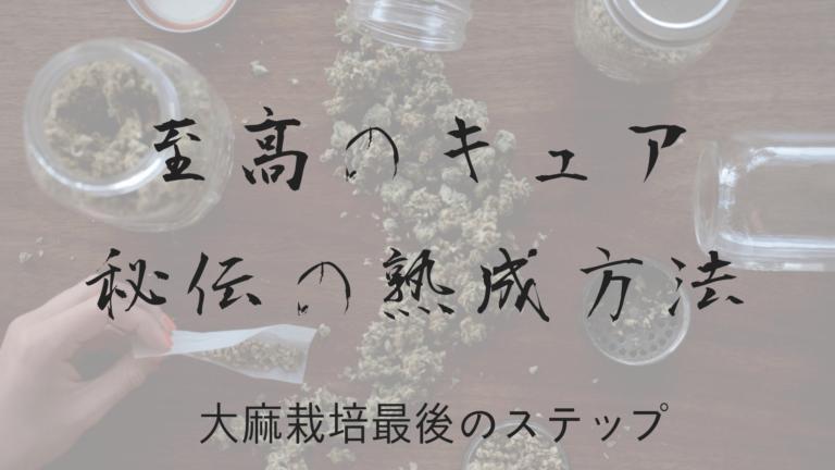 至高のキュア、秘伝の熟成方法大麻栽培最後のステップ