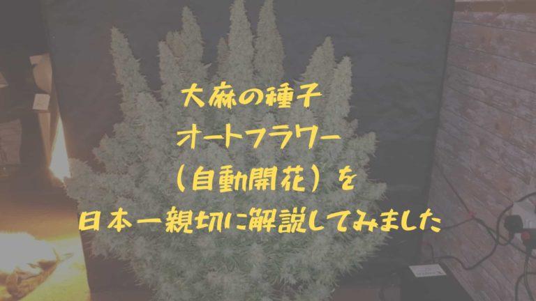 大麻の種子 オートフラワー (自動開花)を 日本一親切に解説してみました