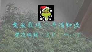 大麻栽培の予備知識 開花時期の流れについて